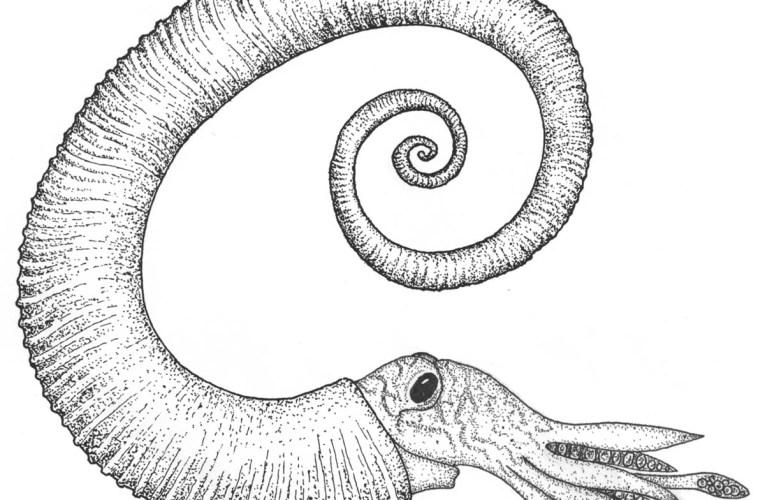 Hooks, paperclips and balls of string: Understanding heteromorph ammonites