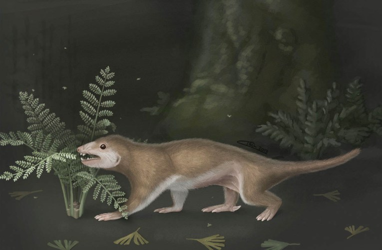 Fossil of hairy, squirrel-sized creature sheds light on evolution of earliest mammals