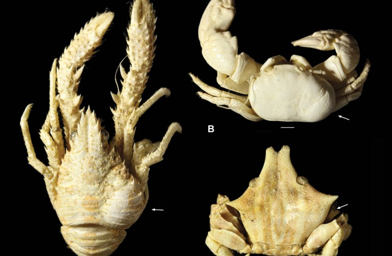 Fossil crustaceans as parasites and hosts