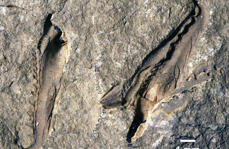 Worm monstrosity: A giant extinct worm