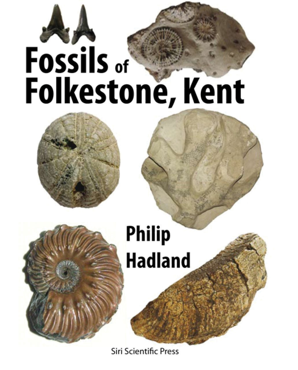 Fossils of Folkestone