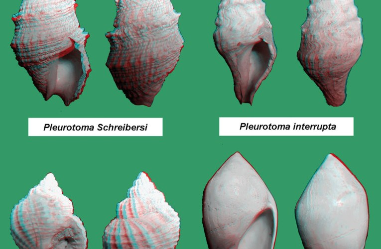Three-dimensional photographs of fossil gastropods from the Paratethys Ocean