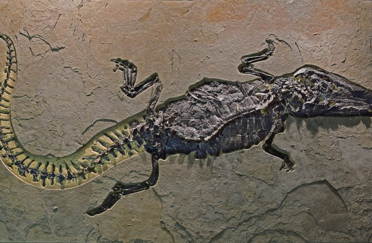 Important Green River Formation fossils come to New York