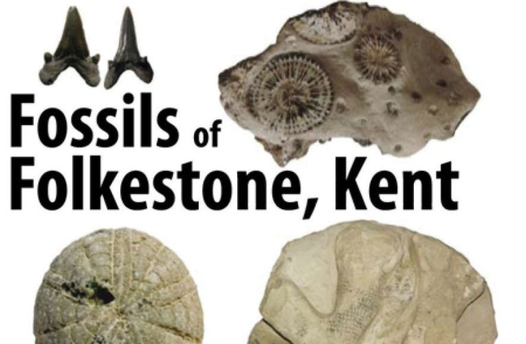 Fossils of Folkestone, Kent, by Philip Hadland