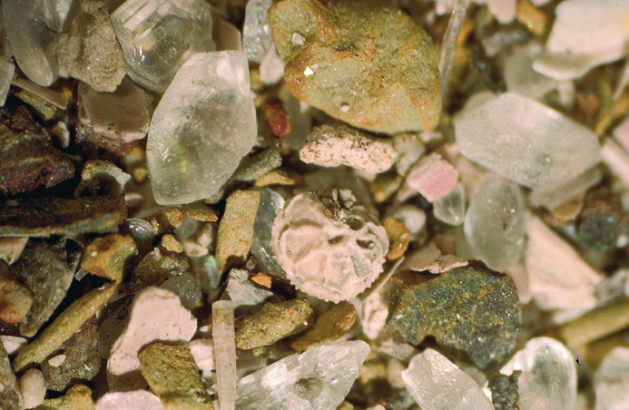 Marvellous microfossils (Part 1): Collecting microfossils from Folkestone