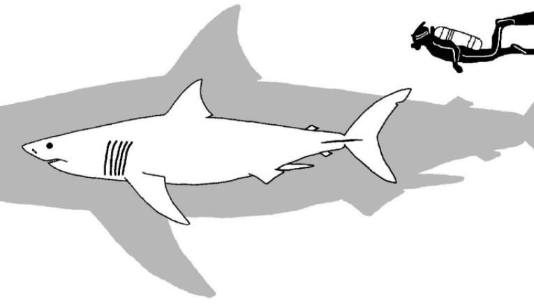 Talking sharks' teeth