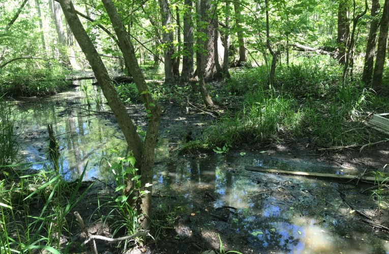 Environmental scientists and geology (Part 2): Geology and soil science in the 'Wetlands and Waters Permitting' process in the USA
