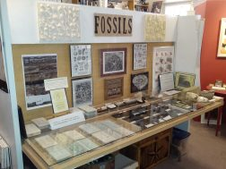 fossils display