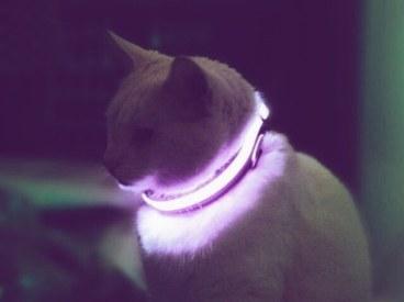 aesthetic-cat-gif-vaporwave-favim-com-4454395