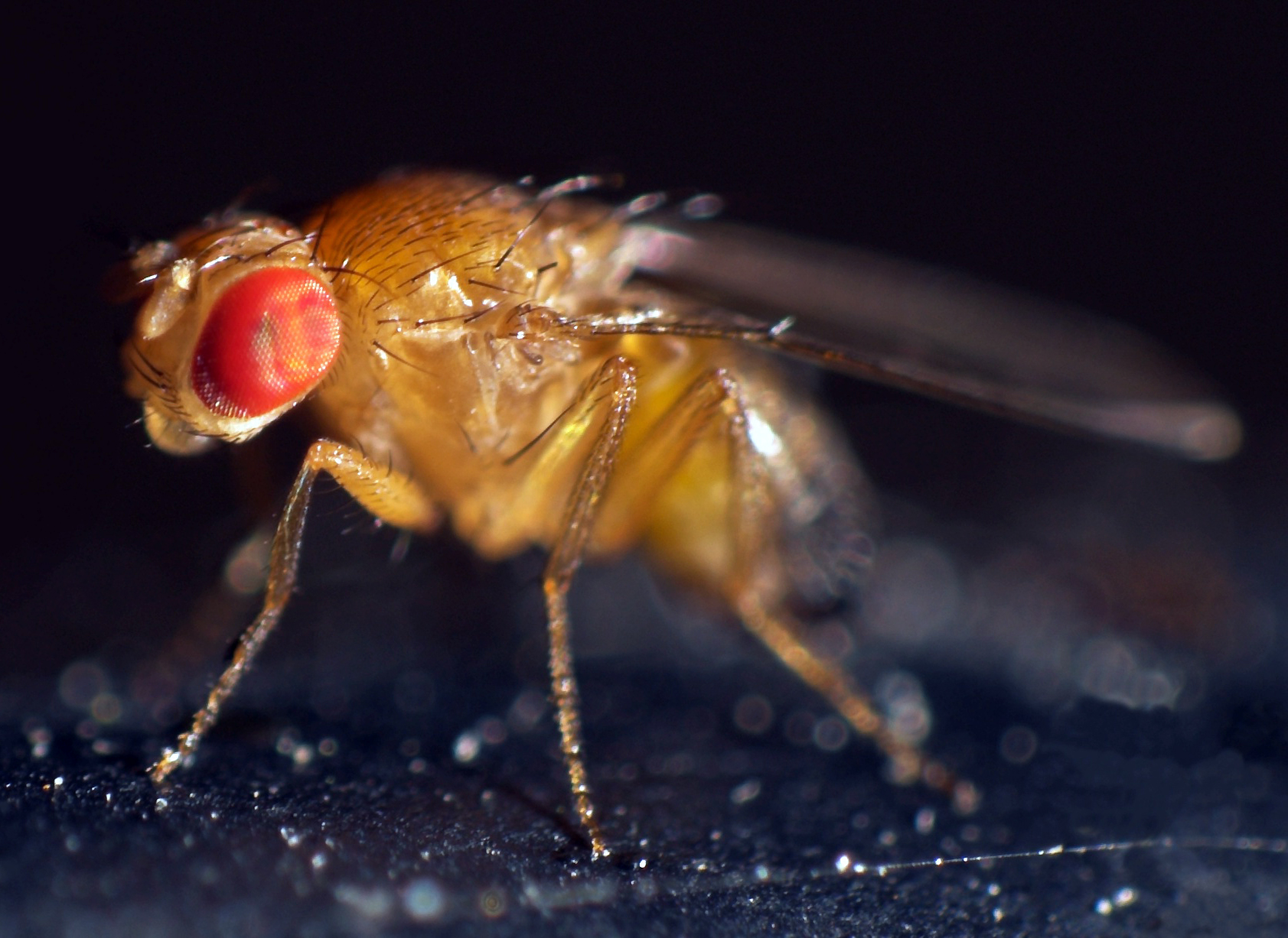 Are all fruit fly sperm comparison can help