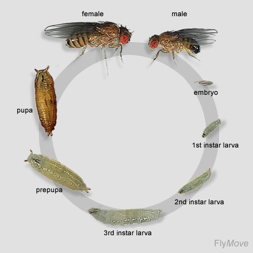 Two Days In The Life Of A Fly