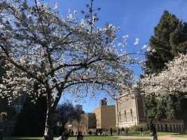 Group Updates:  Grad Visit Weekend, Cherry Blossoms & Alexandra's Birthday!