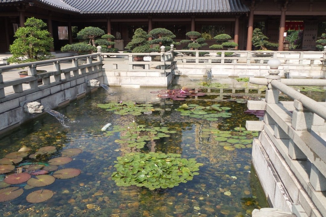 Uno de los estanques del loto
