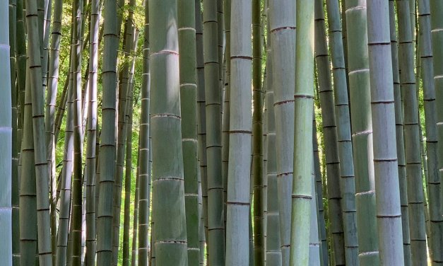 El bosque de bambú de Hōkoku-ji