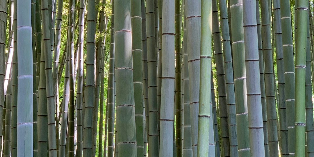 El bosque de bambú del templo Hōkoku-ji