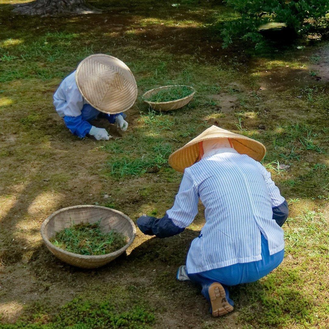 Jardineros en Kenroku-en