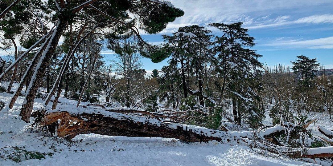 Árbol tronchado en Parque del Oeste