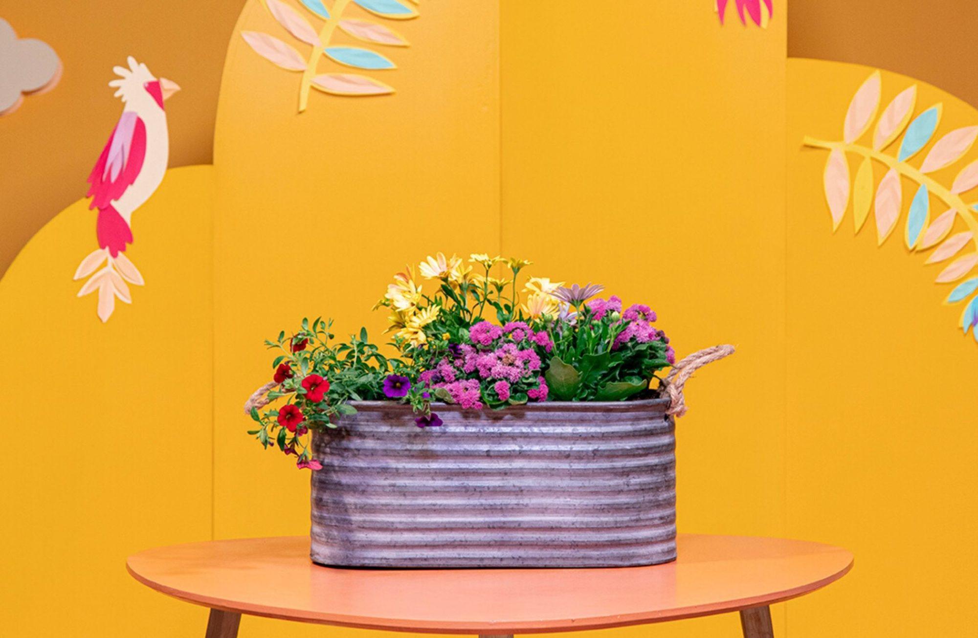 composer une jardiniere estivale