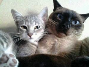 Miau 4