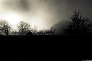 Foto-3781