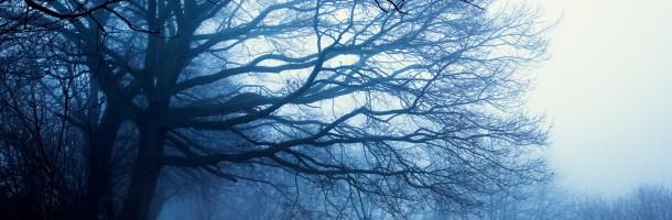 9 Fotos – Nebel ohne Kilimandscharo