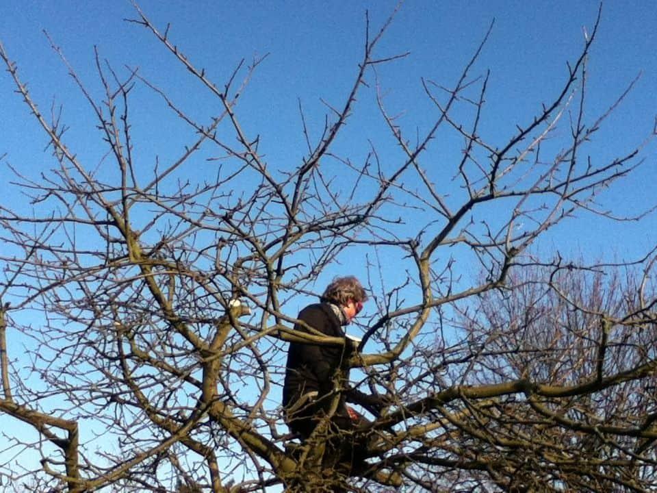 professioneller Obstbaumschnitt