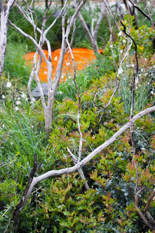 chelsea flower show 2013 fresh garden gewinner