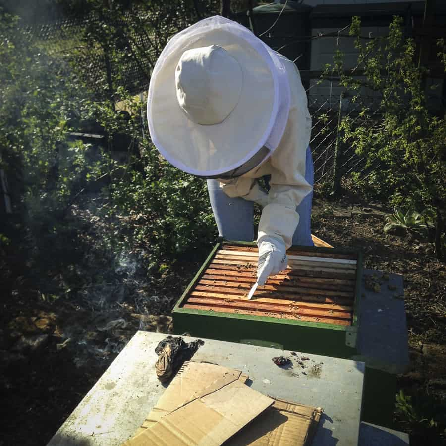 Bienen Wildbau entfernen