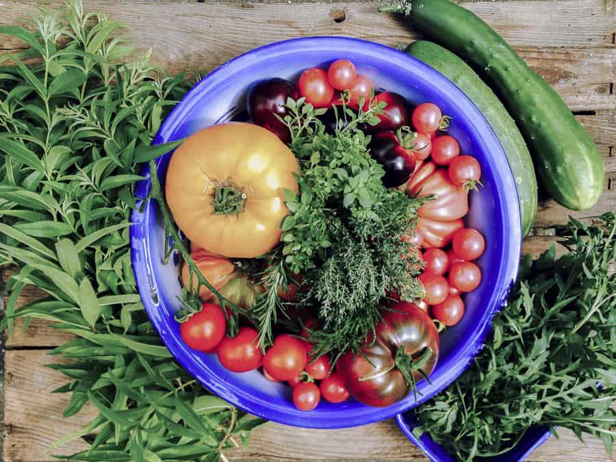 Tomaten, Gurken, Rukola, Zitronenverbene
