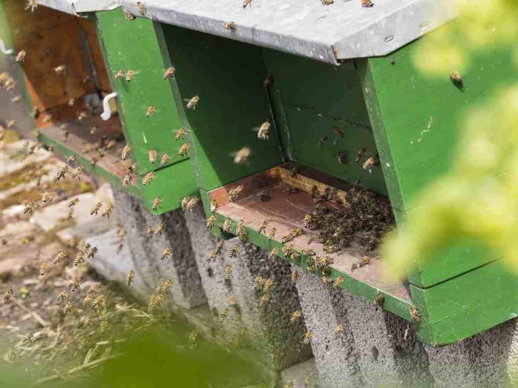 Bienen winterverluste