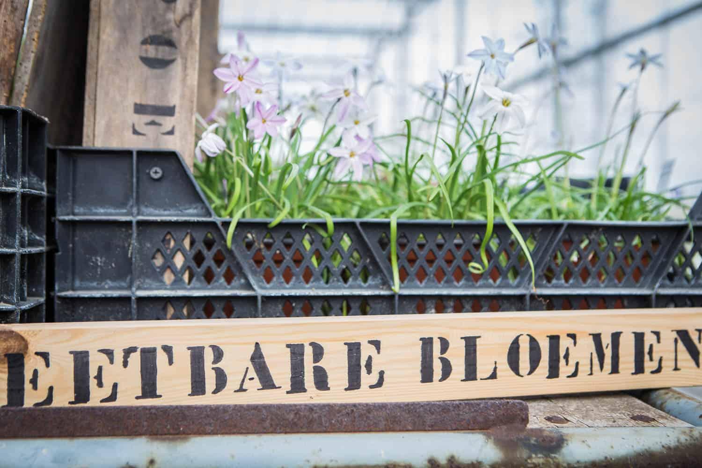 essbare blumen tulpenparadies holland