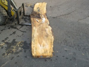 Tischplatte nach mass Ulme B-00288