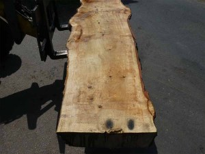 Holzplatten kaufen Pappel S-00086