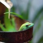 Aus dem Fotoarchiv (8) – Mein Freund der Gecko