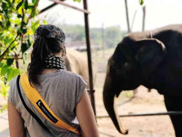 Eerste confrontatie met de olifanten.