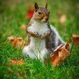 Cute Squirrel Standing in Grass Closeup