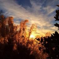 """""""Thanksgiving Nashville sunset #houghfamily"""" - November 29, 2013 Courtesy derekhough IG"""