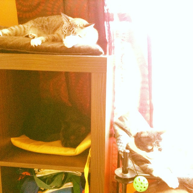 Our 3 cats, so close yet so far away from each other :) - from Instagram