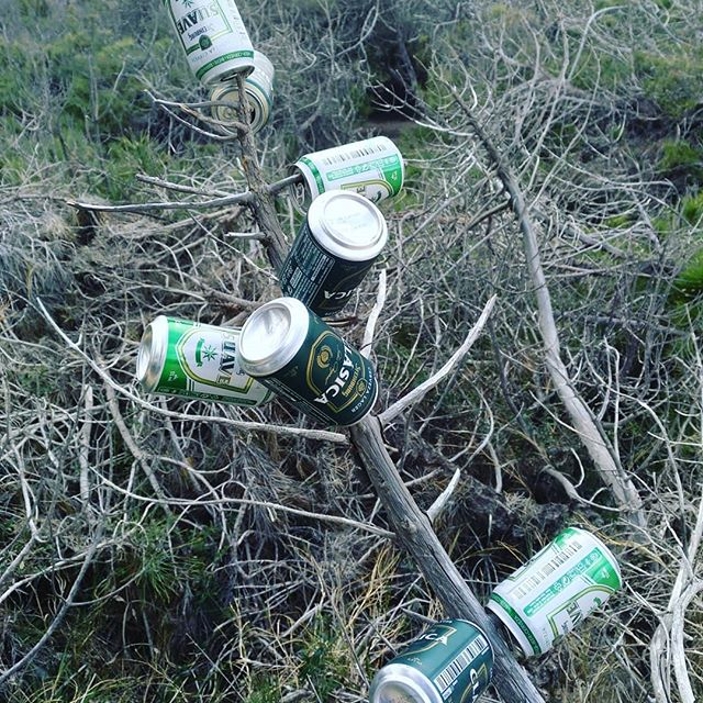 Today I learnt that beer grows on trees. - from Instagram