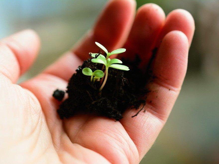 Eine Hand hält einen Keimling mit Erde.