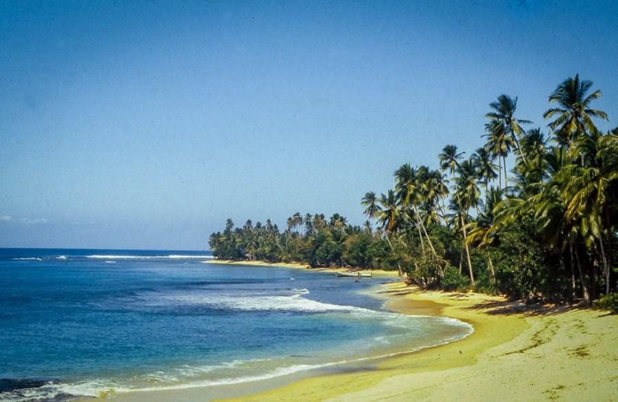 Palmenstrand mit blauem Himmel und blauem Meer.