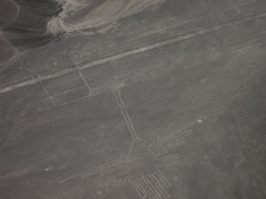 Ausblick auf die Linien-Figur Kolibri