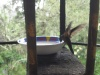 Kolibri bei Acaime