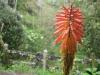 Wahrscheinlich eine Orchideen-Art