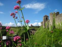 Dover Castle und Natur