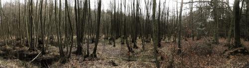 Moor-Laub-Wald Darss