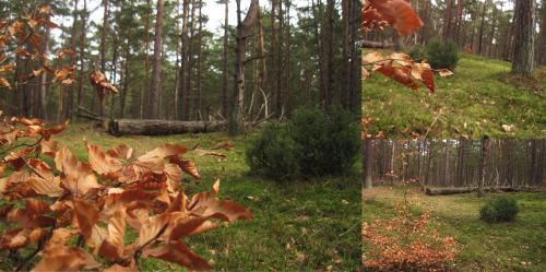 Fruehling-Herbst Darss