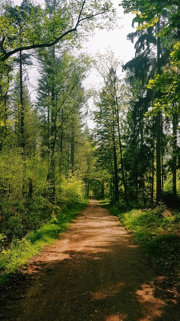 Waldspaziergang Königsforst