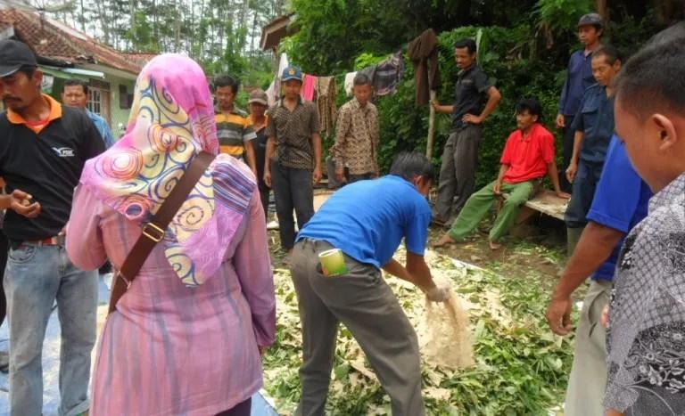 Kelompok Ternak Wana Mukti sedang mengikuti pelatihan pengolahan pakan ternak fermentasi