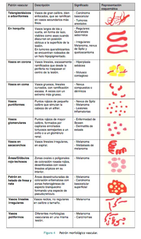 patro-morfologic-vascular